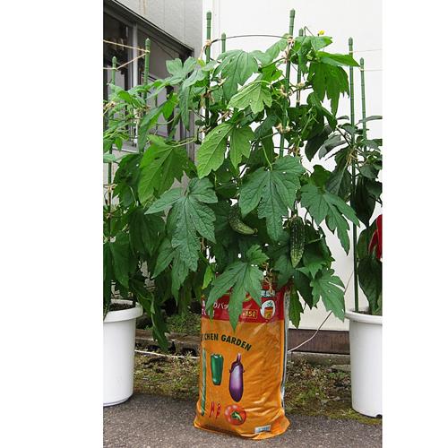 キッチンガーデン 果菜用培養土 野菜の土 15L ※最大3袋まで基本送料600円(税別)でお届けします。(一部地域除く)
