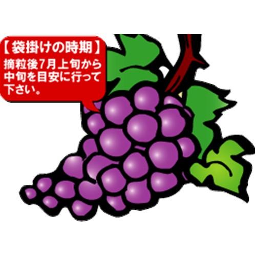 果実袋 ブドウ 小 100枚入り