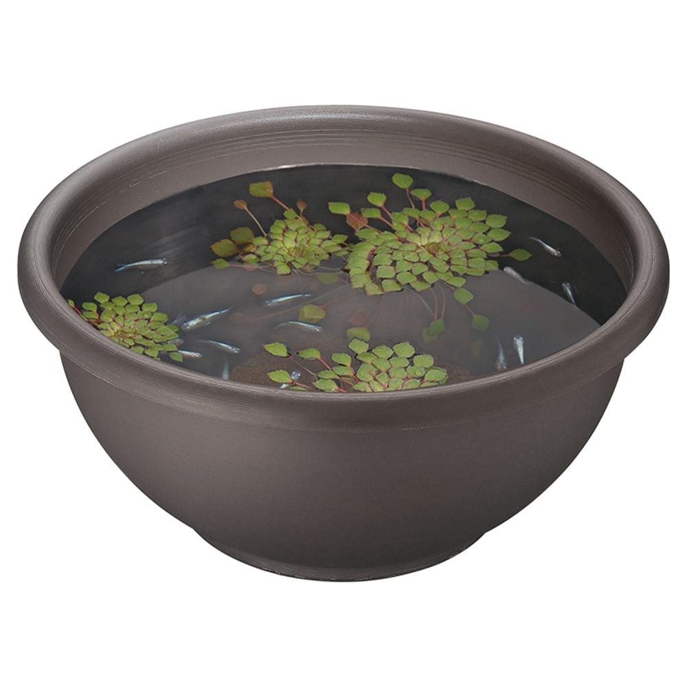 メダカの丸鉢 くろきり
